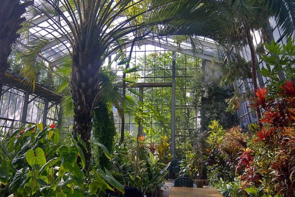 Ogród Botaniczny - Kraków